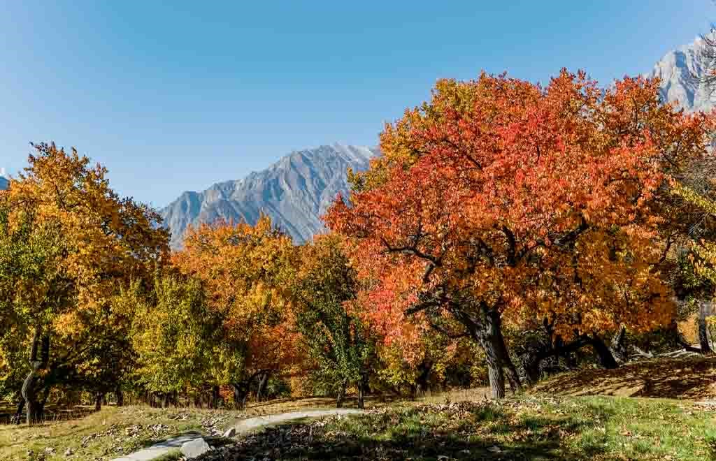 Autumn in Hunza Valley with Ladyfinger mountain in the background